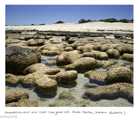 living on a boat in western australia the oldest living things in the world book stunning
