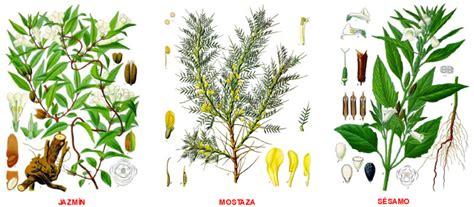 imagenes de flores medicinales jardin botanico