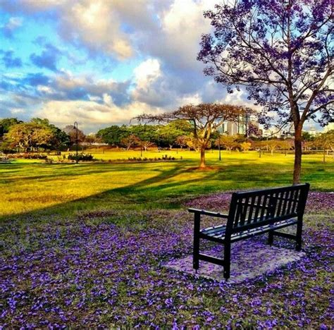 Garden Of Yeronga 17 Best Images About Brisbane Parks On Parks
