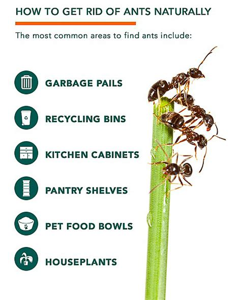 ant killer how to get rid of ants