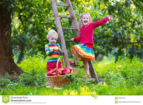 tree with a toddler picking apples in fruit garden stock photo image