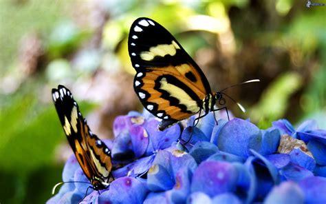 foto farfalle e fiori farfalle sui fiori