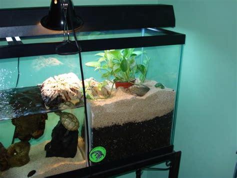 Fish Pot Decoration Best 25 Turtle Tanks Ideas On Pinterest Pet Turtle