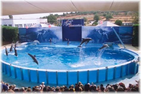 bagno coi delfini zoomarine stunning bagno coi delfini zoomarine photos idee