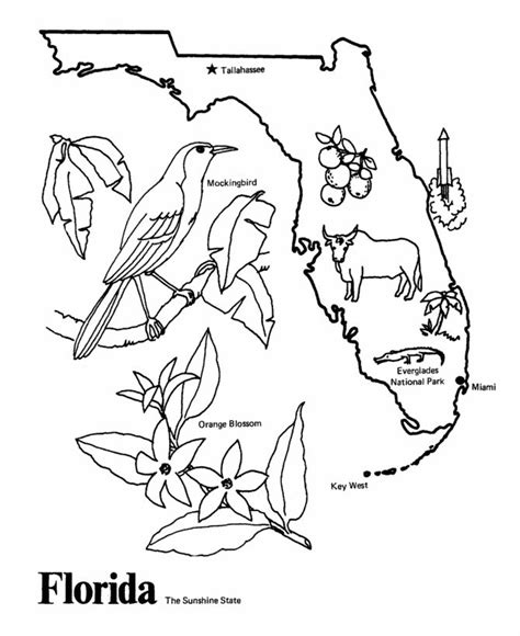 Florida State Coloring Pages florida state outline coloring page happiest place on earth pinte