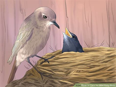 ways  care  wild baby birds wikihow