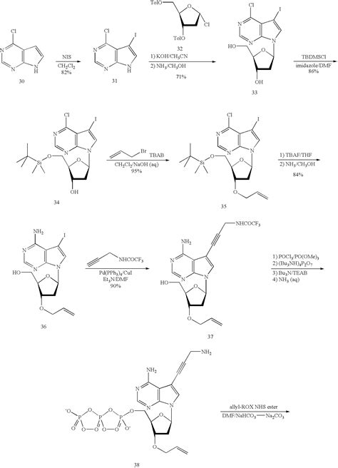 free coloring pages of dna replication