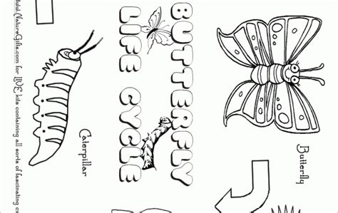 coloring pages butterfly life cycle number names worksheets 187 butterfly life cycle printable