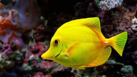is that a fish fish wallpapers best wallpapers