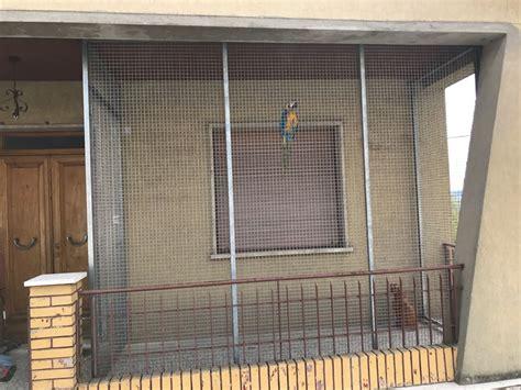 pappagallo in gabbia franky non 232 pi 249 libero il pappagallo in gabbia dopo le