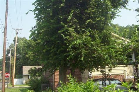 whoa    tree   weed  huffpost