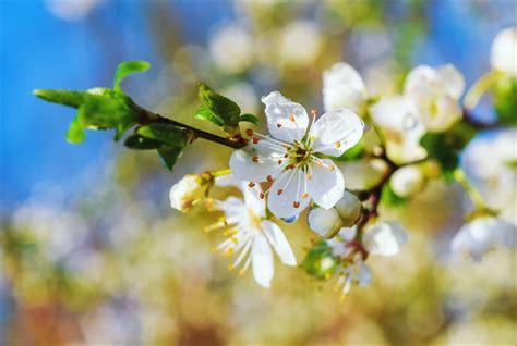 imagenes de flores que parecen animales banco de im 193 genes 20 fotograf 237 as de paisajes flores