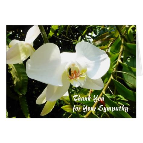 Thank You Card Wording For Sympathy Gift - sympathy thank you cards unique photographic cards plus sle wording