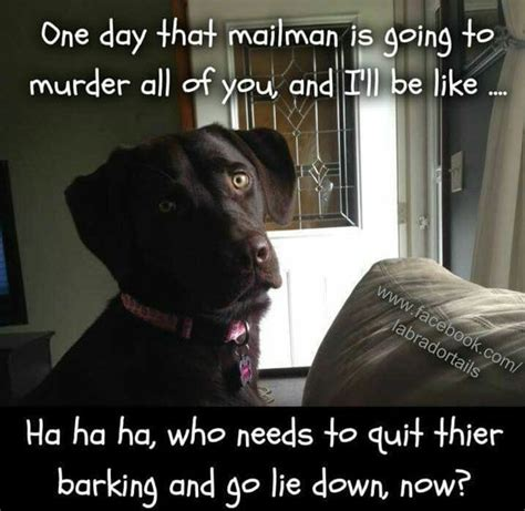 Barking Dog Meme - barking so cute and so true on pinterest