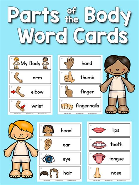 themes of discovery english body parts picture word cards prekinders