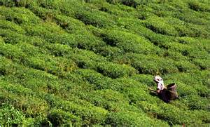 Tea Gardens by 301 Moved Permanently