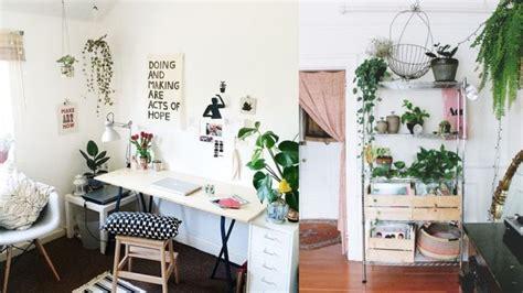 desain kamar kost ala korea 12 inspirasi indoor plant yang praktis untuk rumah sempit