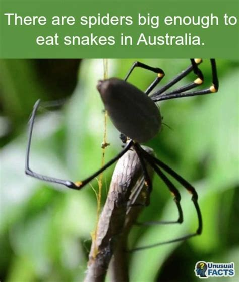 Scary Spider Meme - big spiders damn nature you scary know your meme