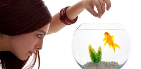 can dogs eat goldfish why fish make better pets than cats and dogs pet attack