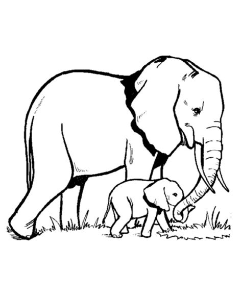 animal family coloring page 1000 images about elephant coloring pages on pinterest