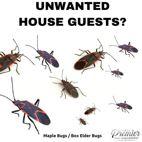 Bugs Guest House the house guests maple bugs in saskatchewan