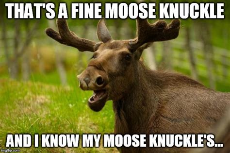 Moose Knuckle Meme - bad pun moose imgflip