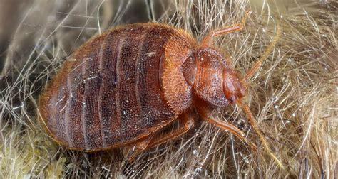 bed bug sprays    effective bed bug spray reviews