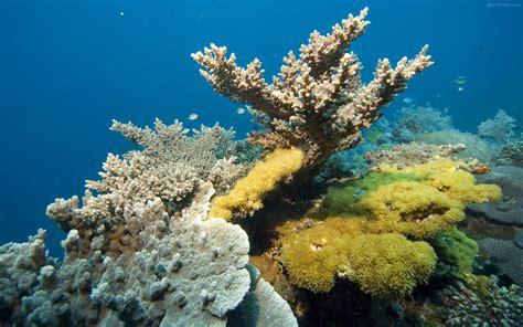 Marjan Coral 綷 綷 綷綷 coral reef
