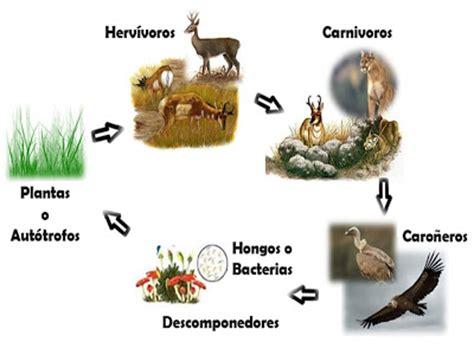 cadena alimenticia hongos y bacterias conociendo la naturaleza