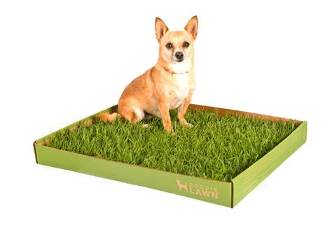 real grass potty m s place doggielawn real grass pet potty review