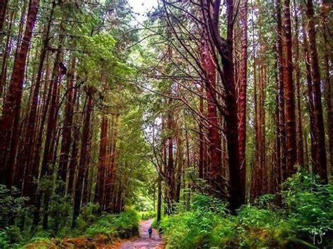 imagenes medicas irazu caminata bosque de prusia pura vida guide costa rica
