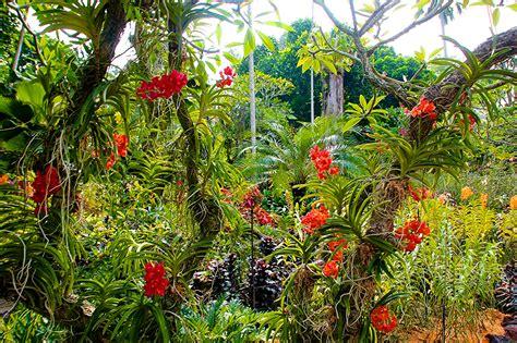 orchideen garten foto singapur botanic gardens natur orchideen garten