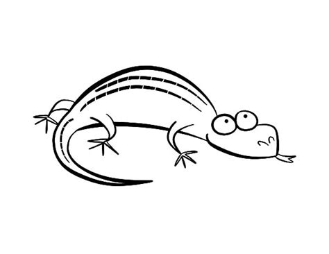 monitor lizard coloring pages monitor lizard coloring pages