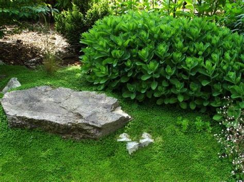 Patio Ground Cover Ideas by The World S Catalog Of Ideas