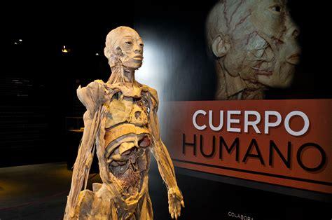 imagenes artisticas del cuerpo humano llega la exposici 243 n quot cuerpo humano quot