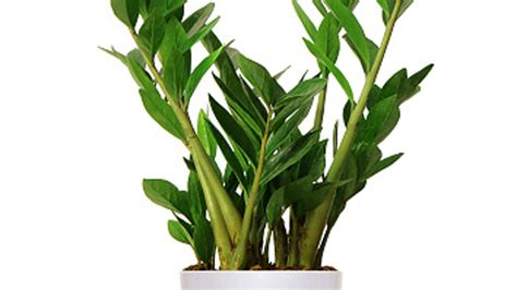 houseplants that don t need light large house plants low light