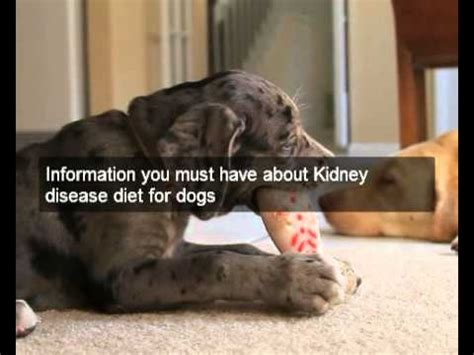 renal diet for dogs great kidney disease diet for dogs cheap food recipes for kidney disease