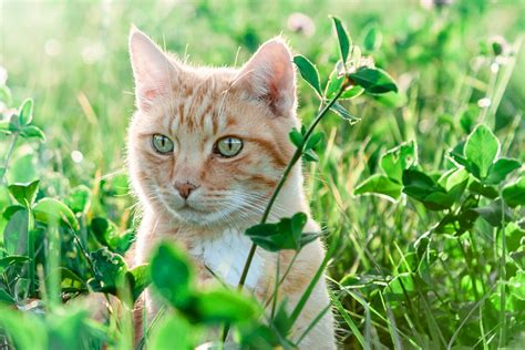 imagenes impresionantes de gatos kostenloses foto natur katze feld wiese gras
