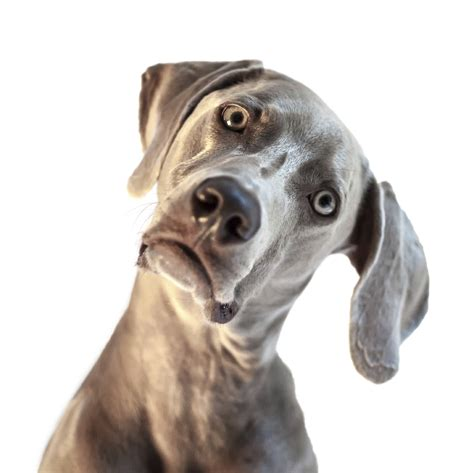 Confused Dog Meme - confused dog blank template imgflip