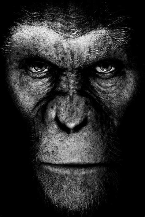 Rise Of The Planet Of The Apes iPhone Wallpaper HD - Free