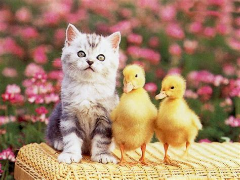 cat easter wallpaper cute cat pictures cute cats photos cute cats pictures