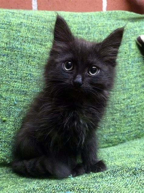 Show Me Your Cat Eye 5 by Best 25 Black Cats Ideas On Names For Black