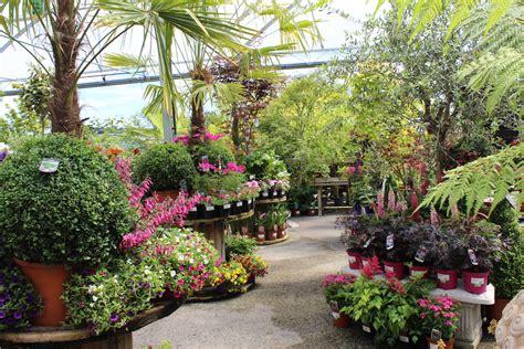 doyles nursery garden centre dublin cabinteely