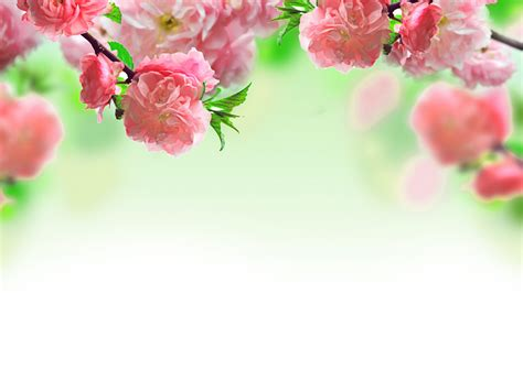 wallpaper green pink floral green and pink flower wallpaper pink flower green