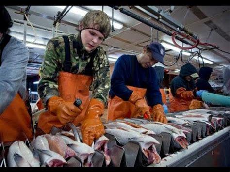 alaska fishing boat processors processing at sea with us seafoods funnydog tv
