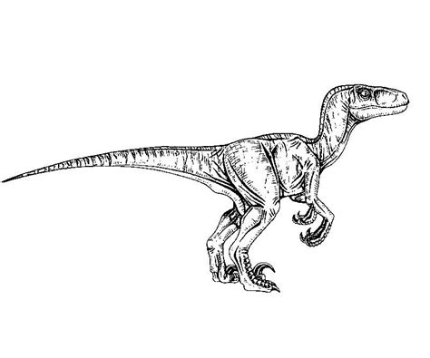 coloring pages velociraptor jurassic park coloring pages velociraptor coloringstar