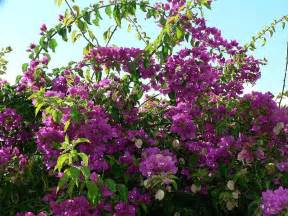 file bush with purple flowers jpg
