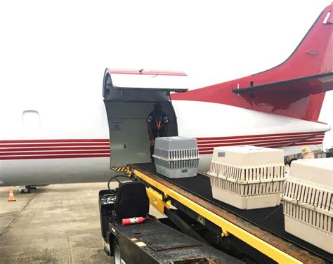 acs helps animals find new homes following hurricanes air cargo week