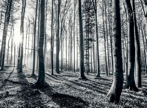 black and white mural wallpaper black and white forest wallpaper murals online store