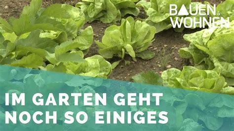Garten Pflanzen Jetzt by Garten Jetzt Im Sommer Salat Pflanzen